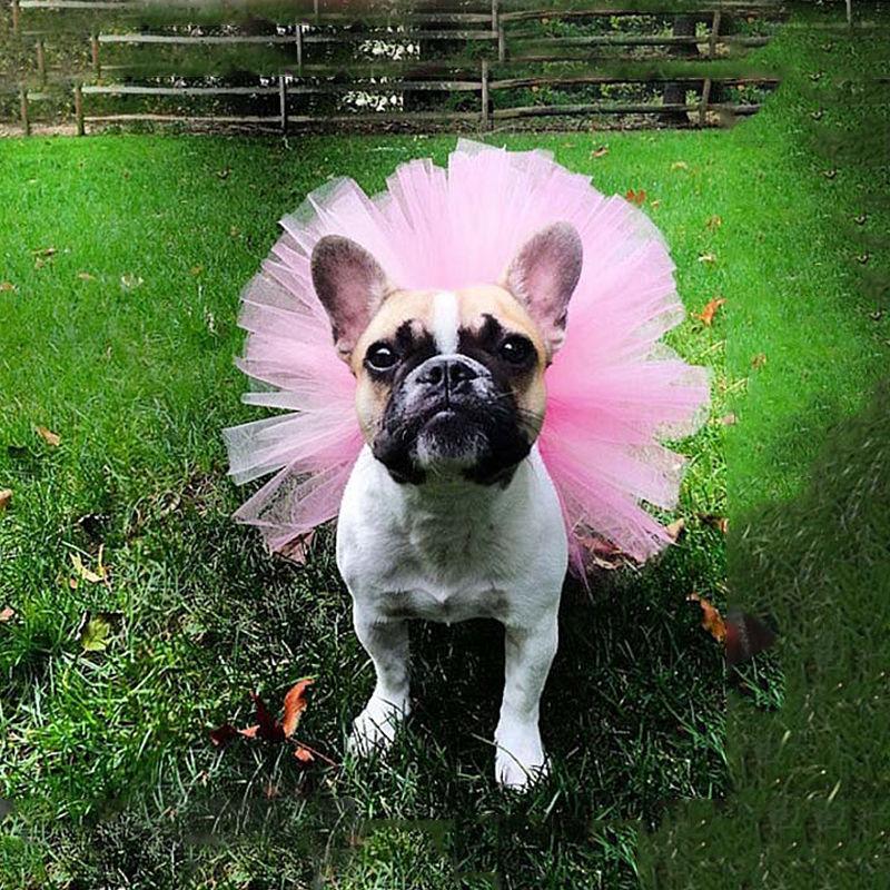 Cute Pet Puppy Dog Cat Lace Skirt Princess Tutu Dress Pet Clothes
